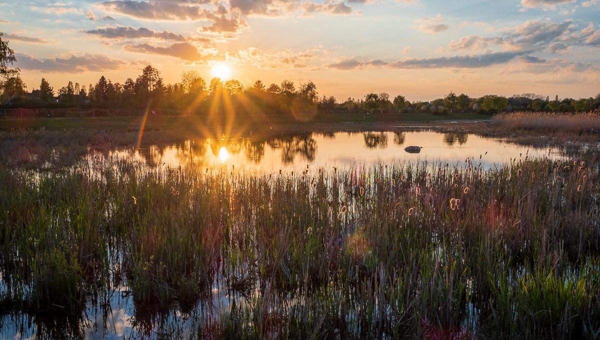 Teich im Landschaftspark