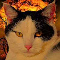 The Apocalyptic Cult of the Crazy Cat Lady