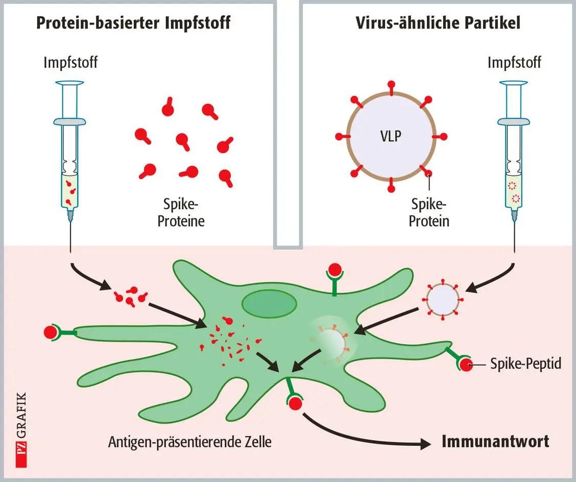 sars cov 2 impfstoffe teil 4 protein