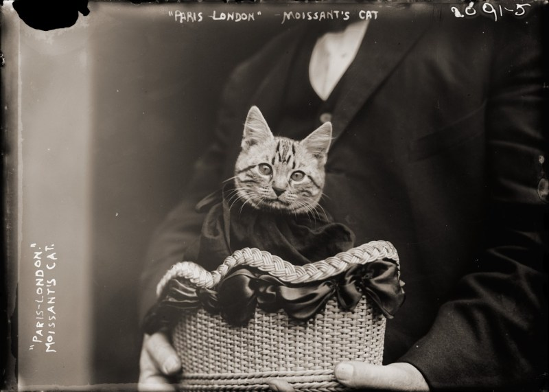 1-photos-anciennes-chat