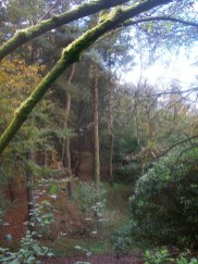 Woodland trees at Tandle Hill Park in the Autumn