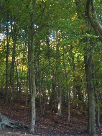 Woodland Dunwood Park