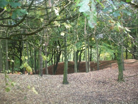 Woodland Tandle Hill Park