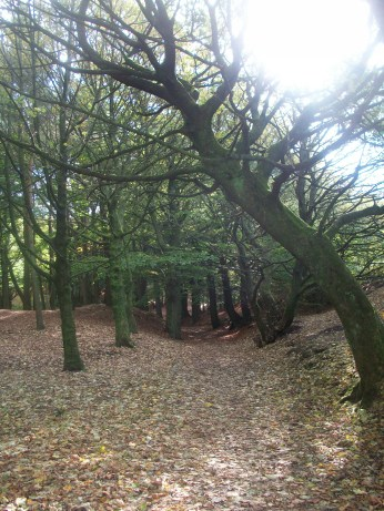 Woodland in autumn. Tandle Hill Park