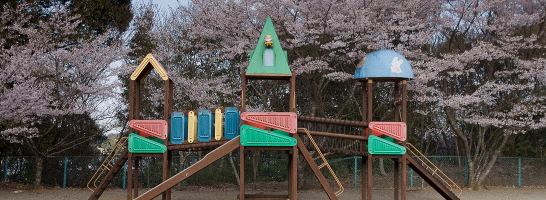 Plaground and spring blossom 'sakura' in the background
