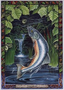 The Salmon of Wisdom from the Druid Animal Oracle illustrated by Will Worthington