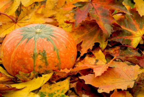 autumn-pumpkin-and-fall-leaves_214713