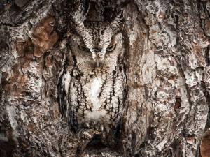 gorgeous owl pic