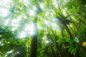 sun-rays-through-rainforest-trees-quincy-dein