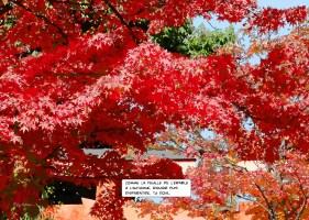 Arbre rouge -- Medium 100x70 259€ // Large 140x100 429€