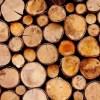 Sawn timber logs