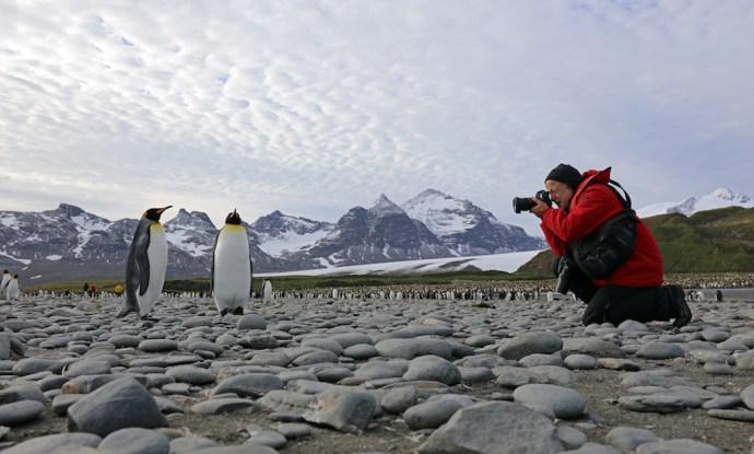 asisi Pinguine Antarktis Katzer