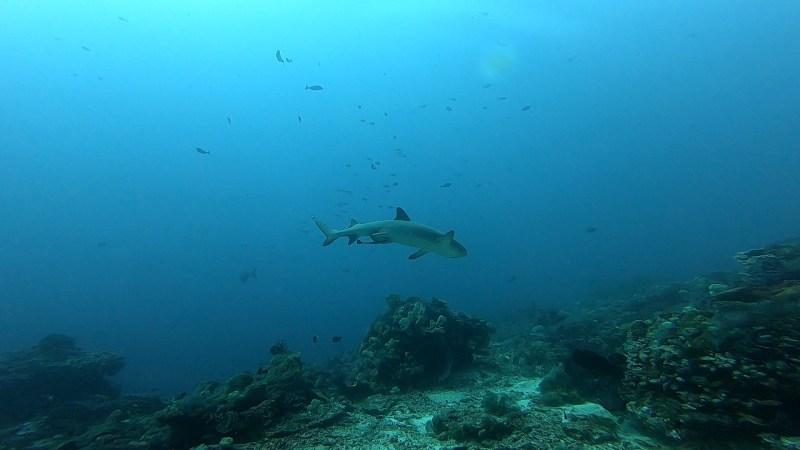 Requin en maraude sur Crystal Rock