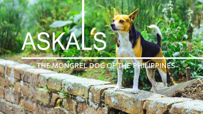 Askals, mongrel dog of the philippines, article head image on askels or aspins