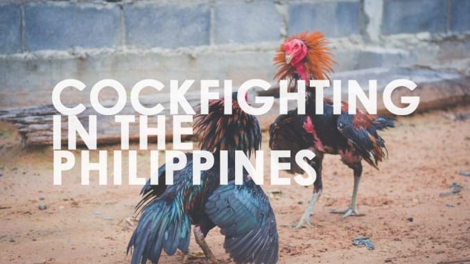 Hand betting in philippine cockfights borgatta sports betting