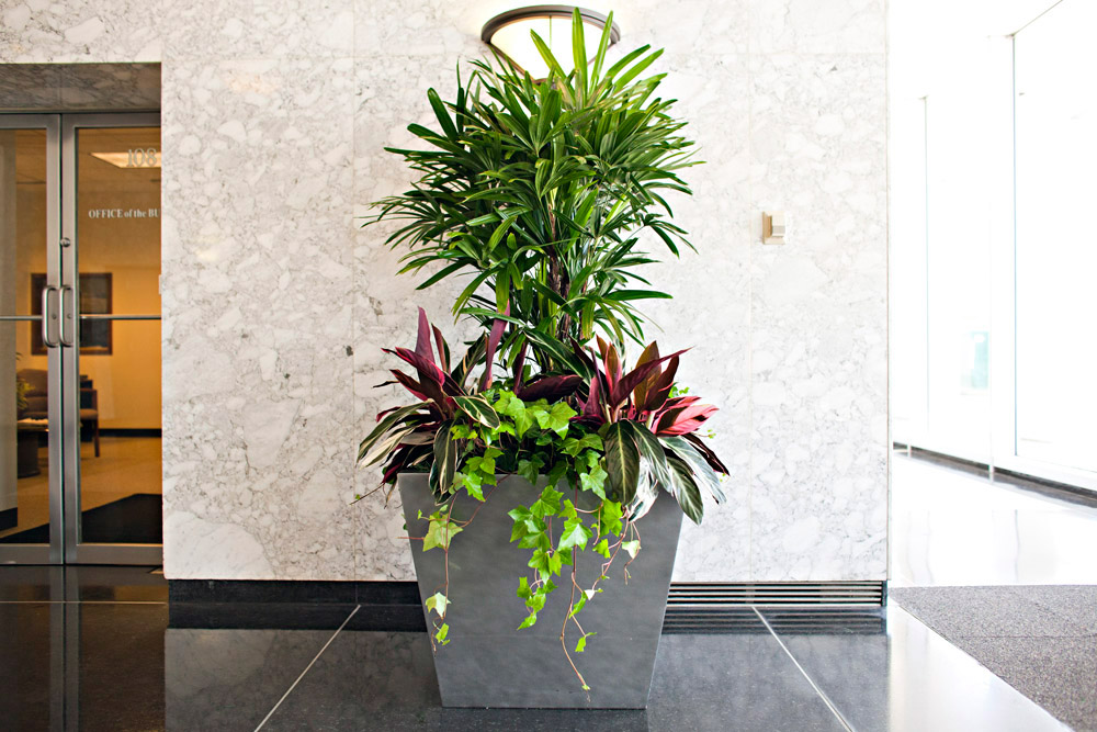Office Decor Plants