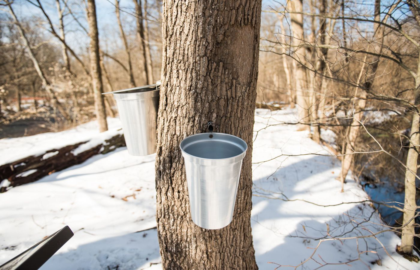 Maple Syrup Season In Philadelphia How And Where To Get