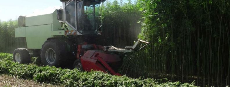Pa Industrial Hemp Farming