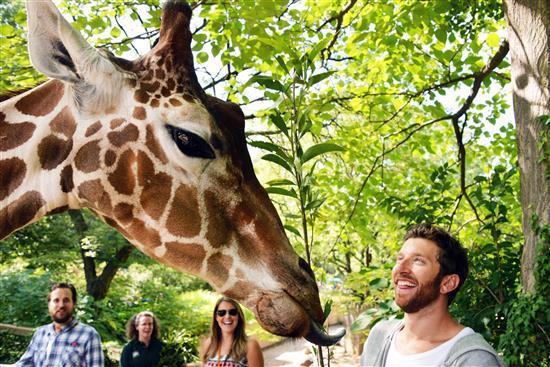 Brett Eldridge with Giraffe for Molly (Custom)