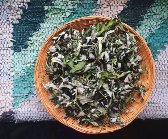 Dried Mugwort [Tea]