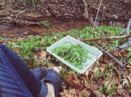 Wild Foraging My Salad