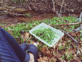 Wild Foraging My Salad