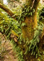 This tree featured not just moss but ferns too