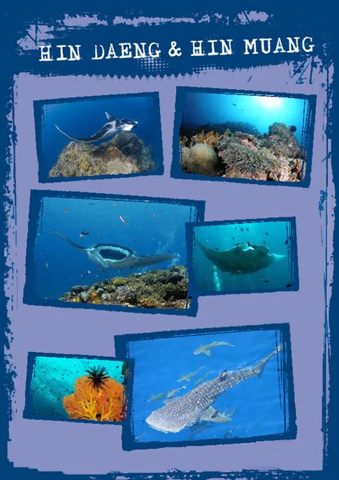 Dive site Hin Daeng near Koh Phi Phi Thailand