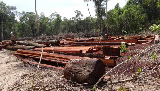 Allegedly illegally felled timber sits in an ELC owned by Try Pheap last year