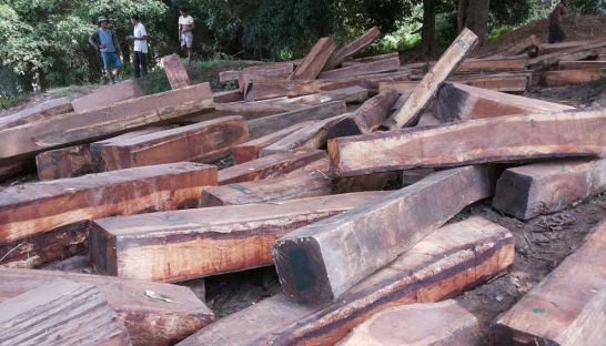 Lumber found by local villagers was allegedly felled inside the Lumphat Wildlife Sanctuary in Ratanakkiri