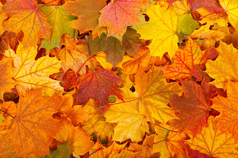 Home Maintenance Tips to Complete This Fall