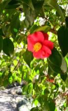 a Brookgreen garden 18