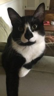 cat sitter podcast 4