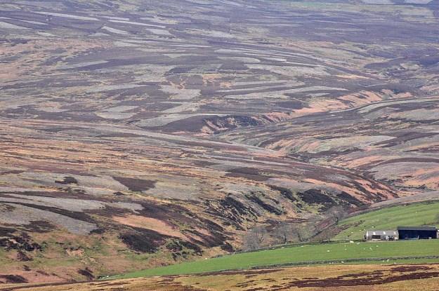 A stripy heather moor