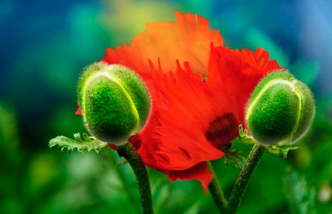A poppy-like alien communicates with its kind via an emission of pollen.