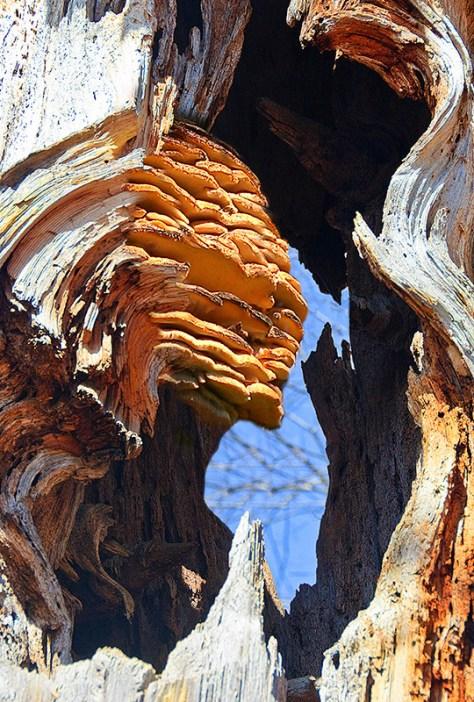 Fantasy, tree fungus pareidolia sphinx head in gnarled trunk
