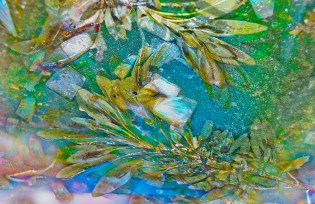 Abstract – sage and onion swirl in colorful liquid