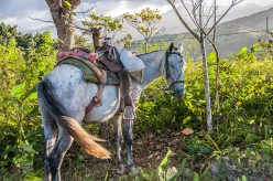 Life – saddled pony barbed wire fence and greenery