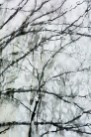 Abstract – view of tree branches distorted by dripping skylite