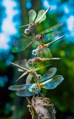Conceptual – dragonflies perched vertically on each others' backs