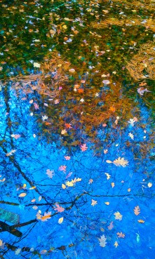Natural – trees and blue sky reflect in a colorful leafy covered pool of water