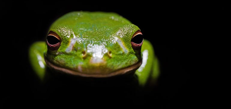 Beating Procrastination: Just Eat a Frog