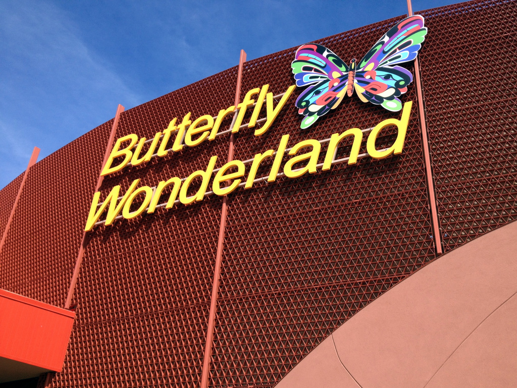 butterfly wonderland in scottsdale arizona