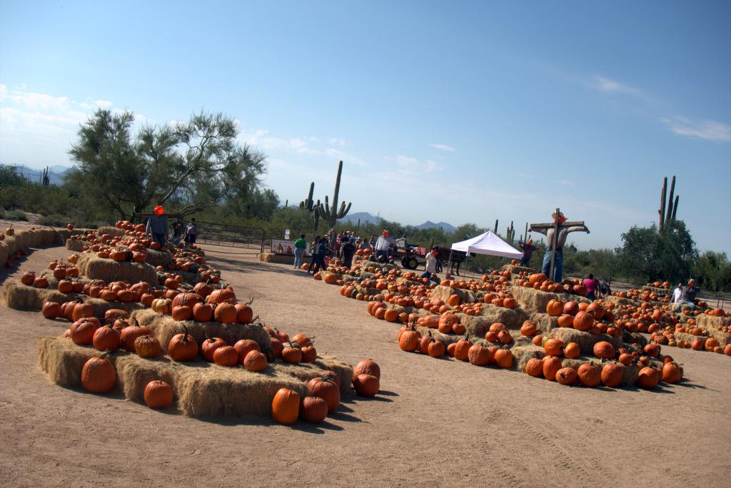 pumpkin-patch-macdonalds-ranch
