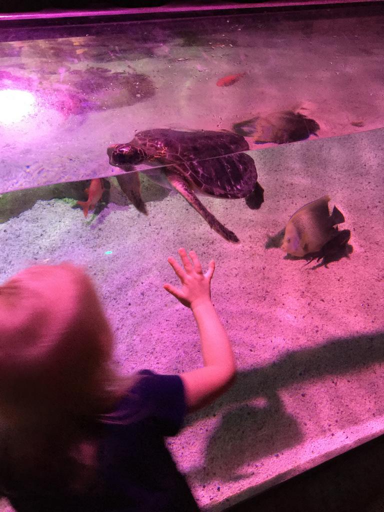 sea-life-arizona-aquarium-photo-IMG_4308