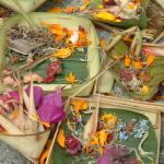 3 augustus 2008 Lovina Beach – Ubud