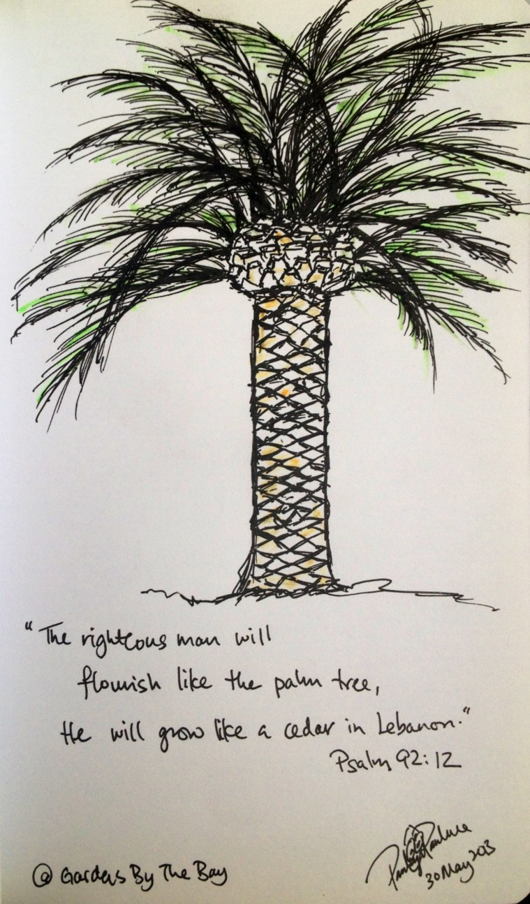 Palm Tree Sketch on Pen