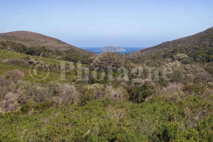 L'ile de la Giraglia depuis le maquis Corse