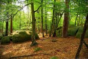 foret-fontainebleau-barbizon-02.jpg