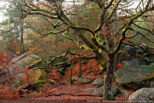 Un arbre dont les branches sont recouvertes de mousse, photographié en hiver dans la forêt de Fontainebleau